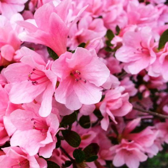 Flowers Cropped.jpg