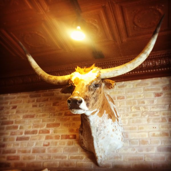 Texas Longhorn in Allen's Boots on South Congress