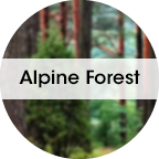 Alpine-Forest-1.png