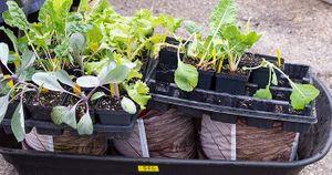 2019-09-19 STH Wheelbarrow with Plants WEBSITE.jpg