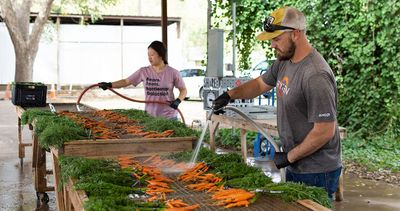 2019-11-06-JBG-Washing-Carrots-IMG-01-WEBSITE.jpg