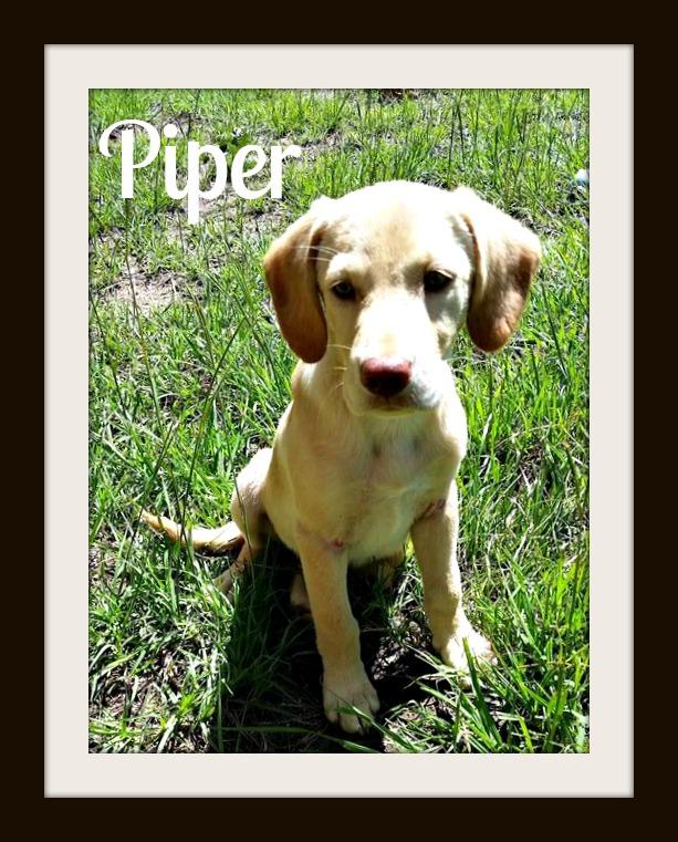 Piper1cvr.jpg