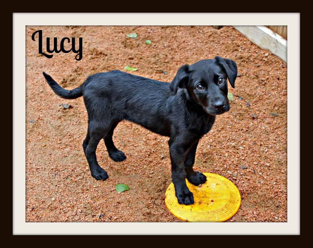 Lucypup5cvr.jpg