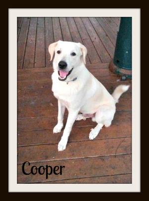 Cooper-cvr.jpg