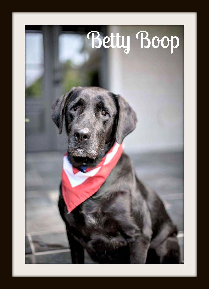 BettyBoop (5)cvr.jpg