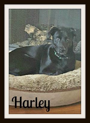Harleycvr (2).jpg