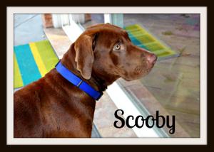 Scooby profile1-1.jpg