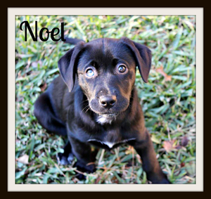 Noel cute-1.jpg