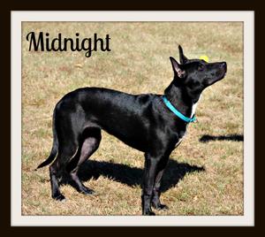 Midnight stand_crop-1.jpg