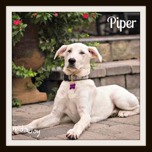 Piper11-1 (3)cvr.jpg