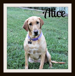 Alice what_crop-1.jpg