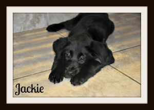 0585 Jackie 3-15cvr.jpg