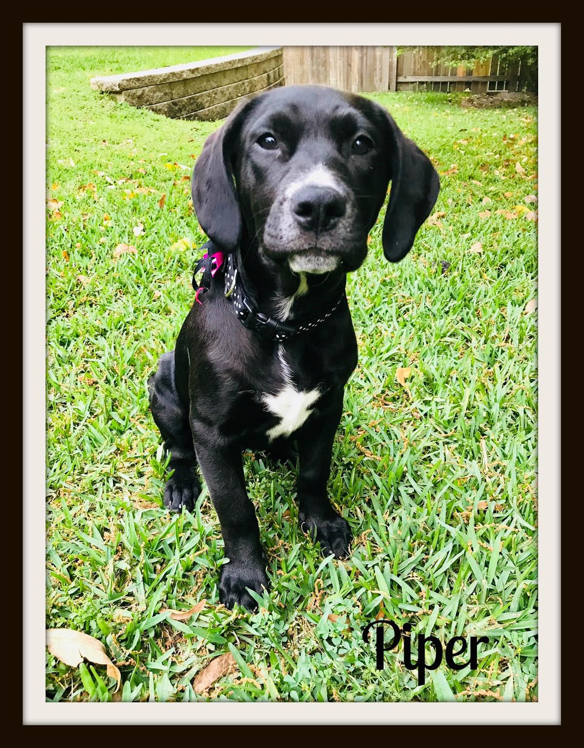 Piper-cvr.jpg