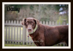 Daisy-cvr.jpg