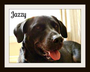 Jazzy (3)cvr.jpg