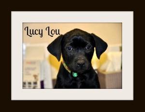 Lucy1cvr.jpg
