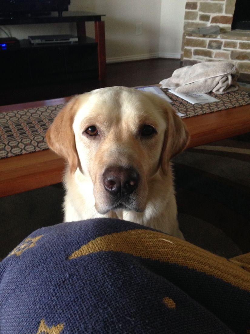 Winston Puppy Eyes.jpg