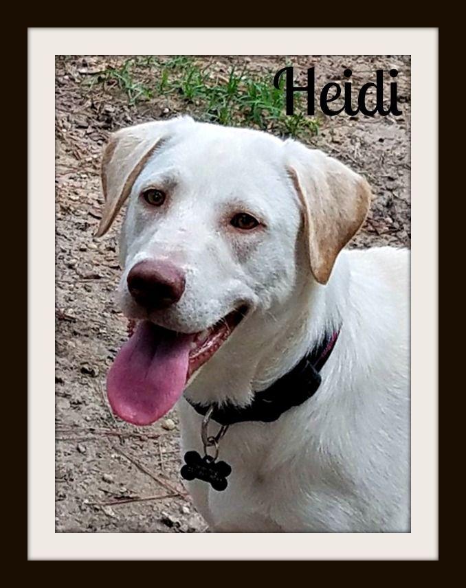 Heidi-cvr.jpg