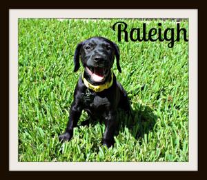 Raleigh smile.jpg