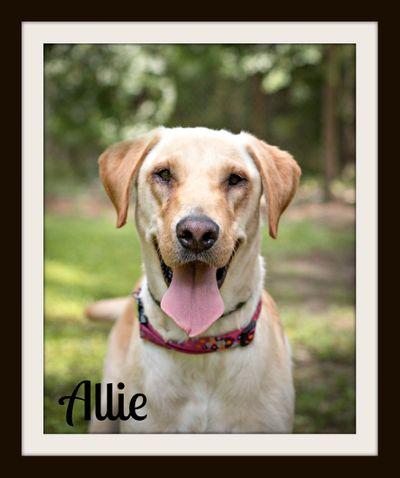 Allie2cvr.jpg