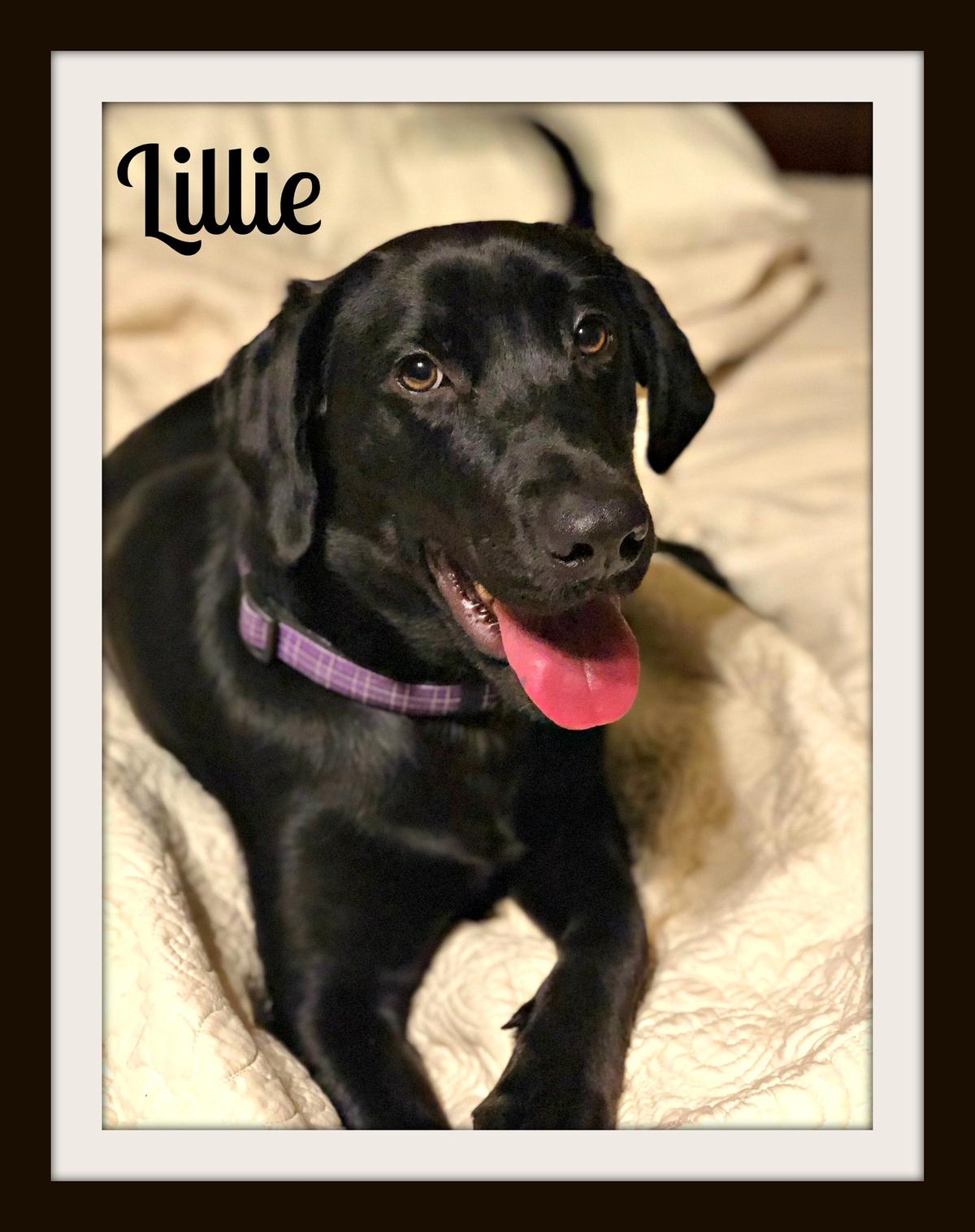 Lillie 6-14 cvr.jpg