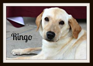 Ringo1cvr.jpg