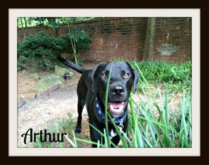 arthur (3).jpg