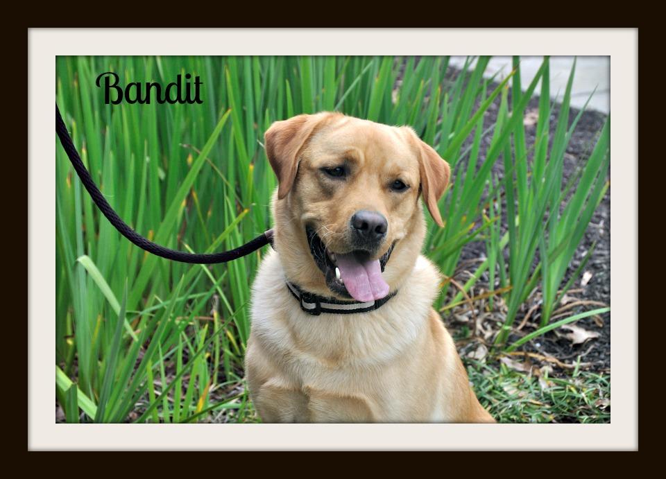0600 Bandit 3-15cvr.jpg