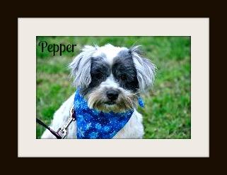 Pepper3cvr.jpg