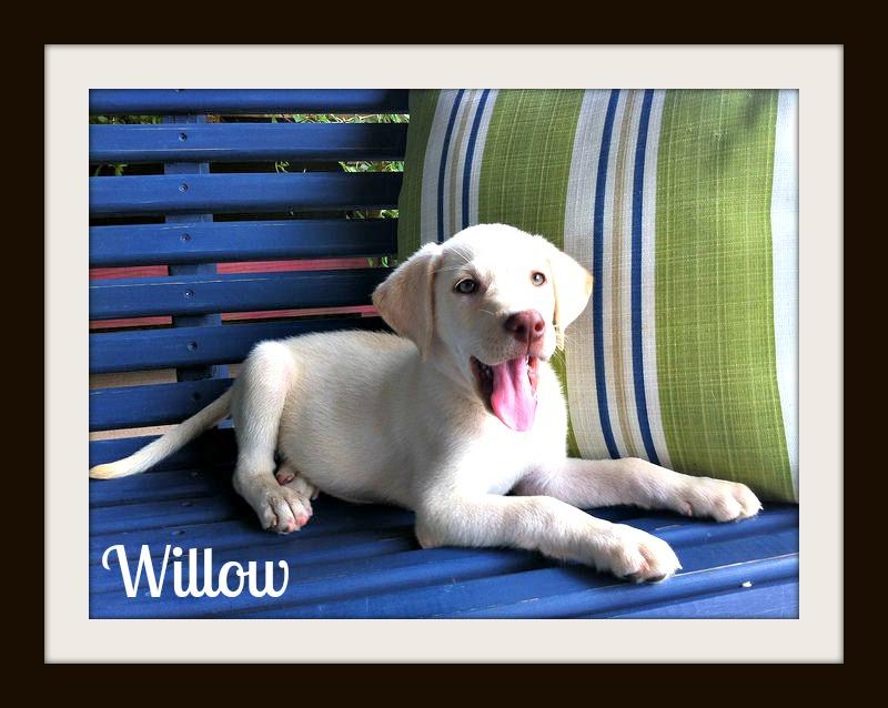Willow (2)cvr.jpg