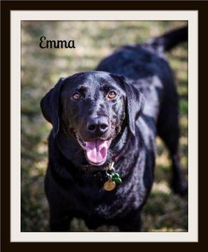 Emma (3).jpg