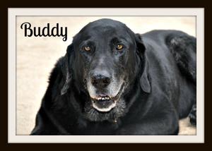 Buddy (4).jpg
