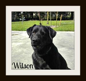 Wilson-cvr.jpg