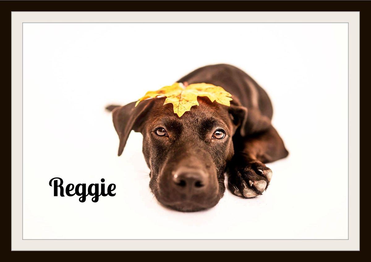 Reggie 10-10.jpg