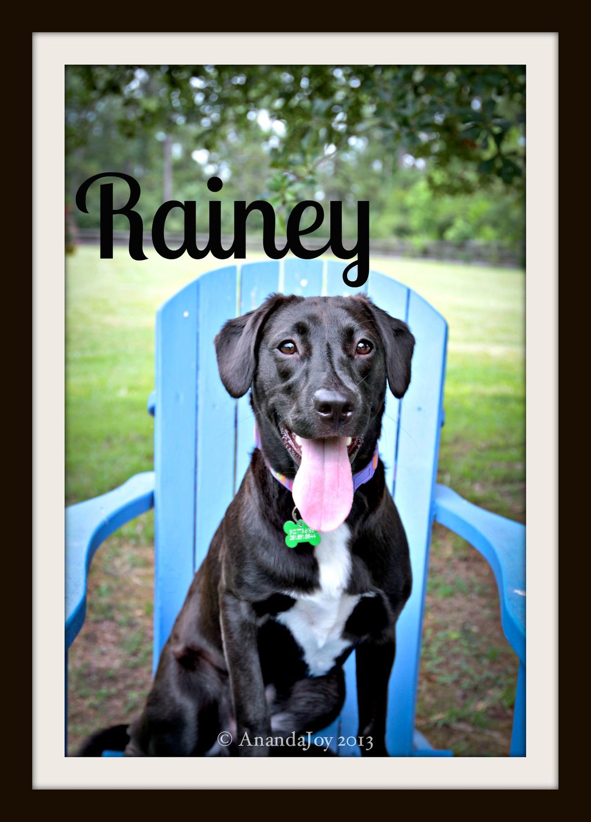 Rainey in chair close-2.jpg