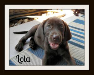 Lola-a (5)cvr.jpg