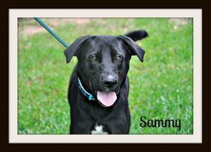 0283 Sammy 6-14cvr.jpg