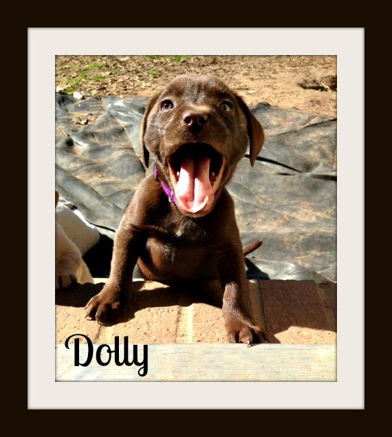 Dollycvr.jpg