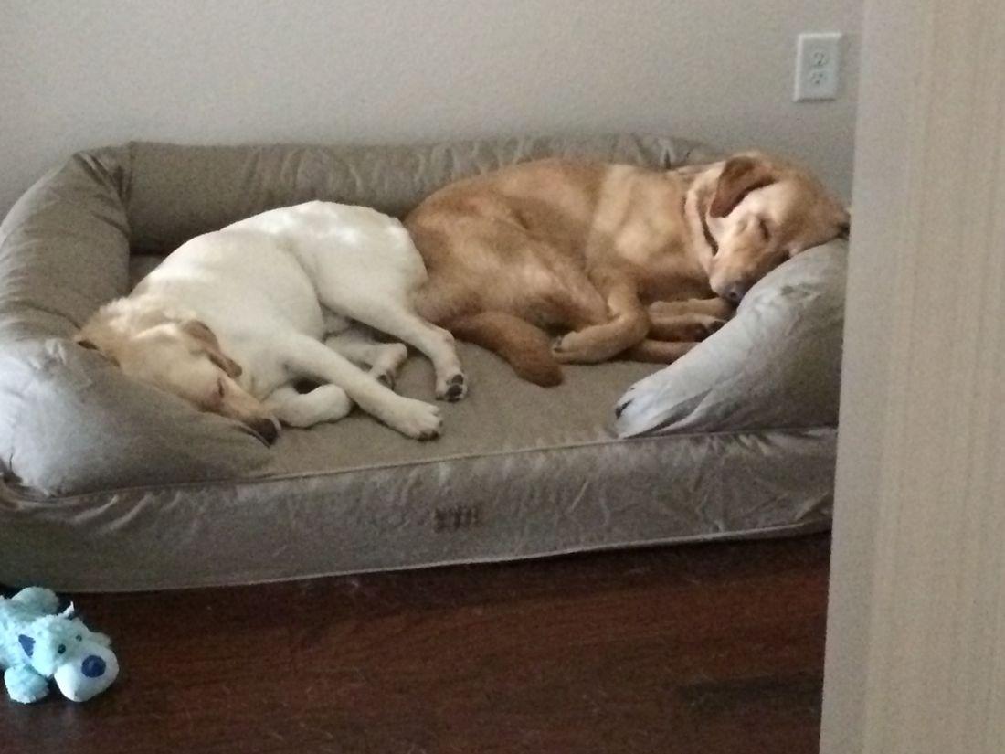 Watson and Winston sleeping.jpg
