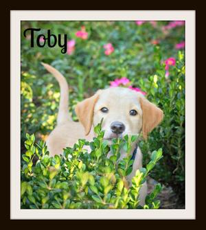 Toby8-30cvr.jpg