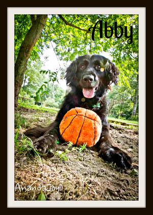Abby (4)cvr.jpg