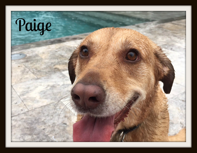 Labby aka Paige (7)-cvr.jpg