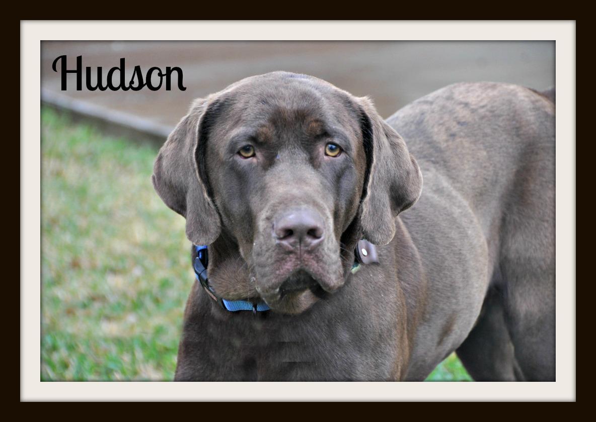 Hudson slobber free1cvr.jpg