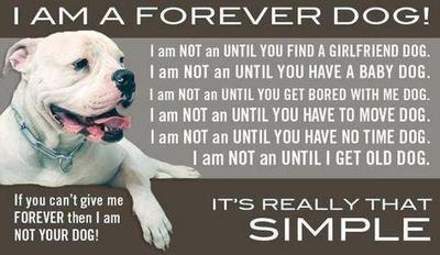 forever dog.jpg