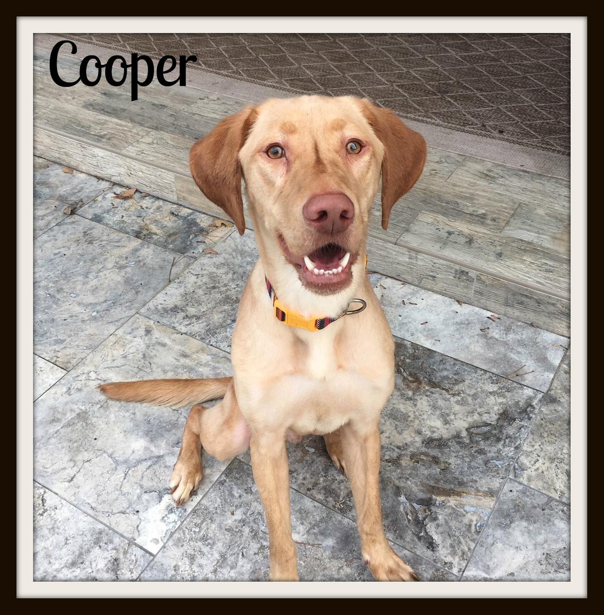 Cooper1cvr.jpg
