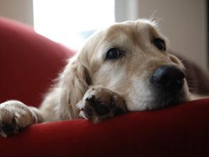 dogsmourndogs.jpg