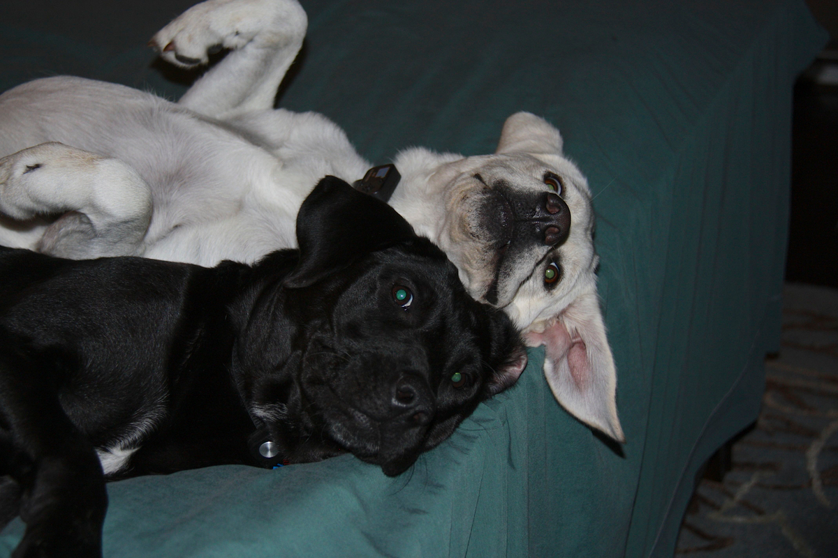 Lily_and_Zoe_chillin-IMG_7547.jpg