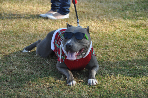 0269 pawswithclaus 12-1-12.jpg