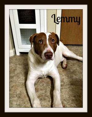Lemmy-cvr.jpg