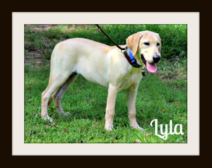 Lyla-cvr.jpg